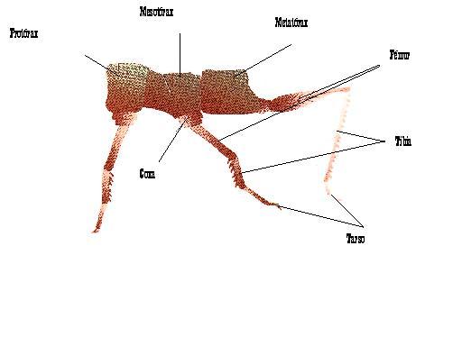 Entomologia. Los insectos, introducción